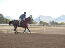 Conditioning gallop